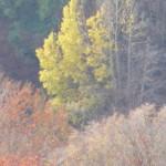 alberi...colori nella valle